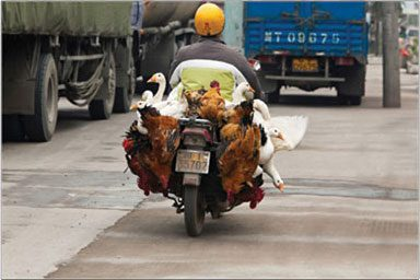 "Stuck in Sichuan traffic, the photographers made the best of the situation by getting out and finding interesting things to shoot. ""I saw this guy coming with lots of poultry at the back so I prepared to shoot after he passed by me,"" says John Wang. ""People there use motorcycles for everything,...carrying passengers, cargo [and] animals."" Photo by John Wang."