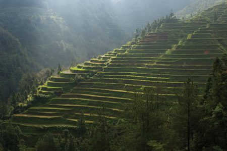 Many of the beautifully sculpted terraces seen on mountainsides such as thes in the Guizhou Province were created during the Ming Dynasty - some 500 years ago. Photo by John Telford.