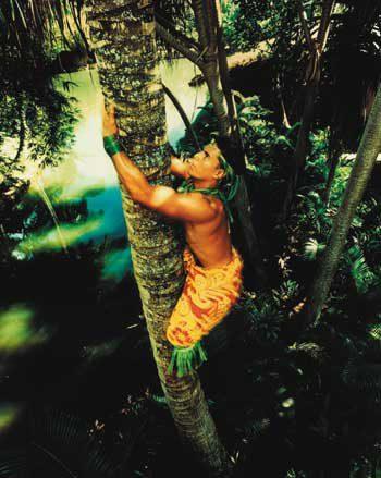 poly tree climbing