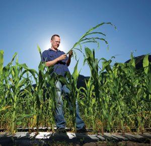 Grass to Corn Clinton Whipple