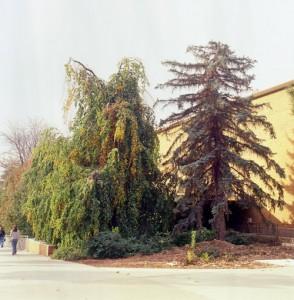 BYU Trees