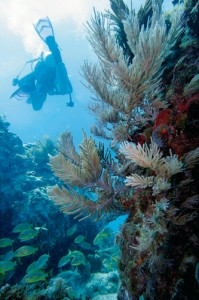 BYU Geology student exploring a Caribbean coral reef.