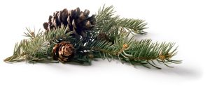 Pinecones and branch