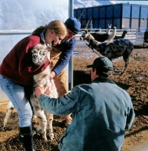 Students helping Llamas
