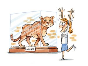 An illustration of a liger named Shasta in a glass exhibit with a girl looking very happy with her hands in the air and one foot lifted.