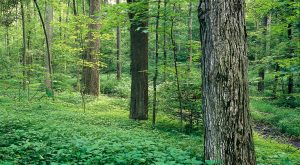 A photograph of the Sacred Grove.