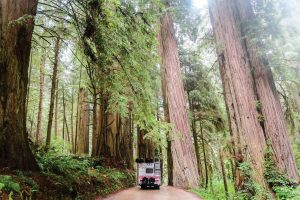 The Hofmans driving through redwoods.