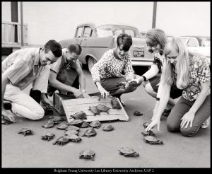 "Students unpack the contestants for the 1968 ""Turtle Trot,"" a regular feature of the era's Homecoming celebrations."