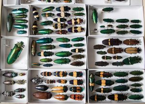 Emerald ash borers and other wood-borer beetles
