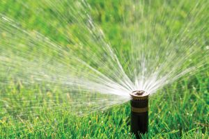A tight shot of a sprinkler watering a lawn