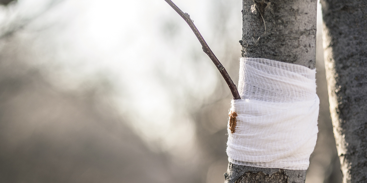 A tree branch wrapped in white gauze around a tree trunk.