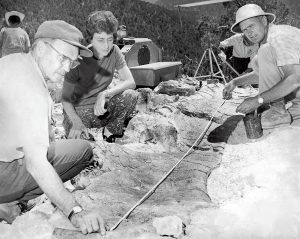 An archival photo from 1972 of Dinosaur Jim Jensen and other BYU paleontologists measure a large fossil.